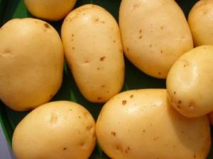 progetto la patata